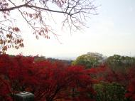 Asisbiz Maple trees Autumn leaves Kiyomizu dera Kyoto Japan Nov 2009 140