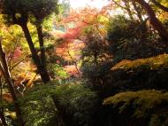 Asisbiz Maple trees Autumn leaves Kiyomizu dera Kyoto Japan Nov 2009 141
