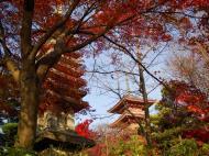 Asisbiz Otowa san Kiyomizu dera Pagoda Kyoto Nov 2009 15