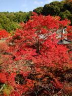 Asisbiz Otowa san Kiyomizu dera Temple Kyoto Japan Nov 2009 05