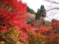 Asisbiz Otowa san Kiyomizu dera Temple Kyoto Japan Nov 2009 10