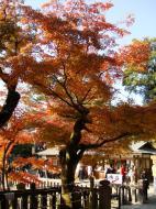 Asisbiz Otowa san Kiyomizu dera Temple Kyoto Japan Nov 2009 12