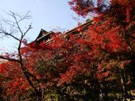 Asisbiz Otowa san Kiyomizu dera Temple Kyoto Japan Nov 2009 41