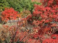 Asisbiz Otowa san Kiyomizu dera Temple Kyoto Japan Nov 2009 49