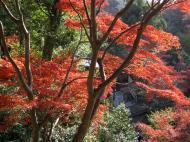 Asisbiz Otowa san Kiyomizu dera Temple Kyoto Japan Nov 2009 54