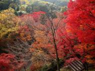 Asisbiz Otowa san Kiyomizu dera garden walkways Kyoto Nov 2009 04