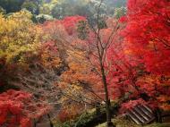 Asisbiz Otowa san Kiyomizu dera garden walkways Kyoto Nov 2009 05
