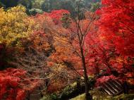 Asisbiz Otowa san Kiyomizu dera garden walkways Kyoto Nov 2009 07