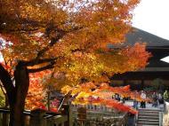 Asisbiz Otowa san Kiyomizu dera garden walkways Kyoto Nov 2009 13
