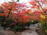 Asisbiz Otowa san Kiyomizu dera garden walkways Kyoto Nov 2009 15