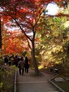 Asisbiz Otowa san Kiyomizu dera garden walkways Kyoto Nov 2009 17
