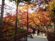 Asisbiz Otowa san Kiyomizu dera garden walkways Kyoto Nov 2009 18