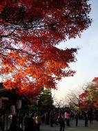 Asisbiz Otowa san Kiyomizu dera garden walkways Kyoto Nov 2009 20
