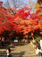 Asisbiz Otowa san Kiyomizu dera garden walkways Kyoto Nov 2009 21