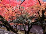 Asisbiz Otowa san Kiyomizu dera garden walkways Kyoto Nov 2009 24