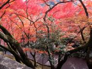 Asisbiz Otowa san Kiyomizu dera garden walkways Kyoto Nov 2009 25
