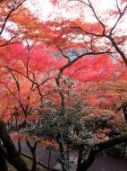 Asisbiz Otowa san Kiyomizu dera garden walkways Kyoto Nov 2009 26