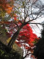 Asisbiz Otowa san Kiyomizu dera garden walkways Kyoto Nov 2009 30