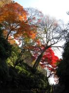 Asisbiz Otowa san Kiyomizu dera garden walkways Kyoto Nov 2009 31