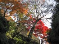 Asisbiz Otowa san Kiyomizu dera garden walkways Kyoto Nov 2009 32