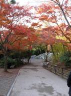 Asisbiz Otowa san Kiyomizu dera garden walkways Kyoto Nov 2009 33