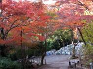 Asisbiz Otowa san Kiyomizu dera garden walkways Kyoto Nov 2009 34