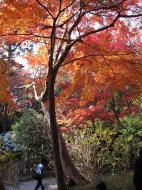 Asisbiz Otowa san Kiyomizu dera garden walkways Kyoto Nov 2009 35