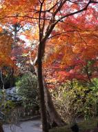 Asisbiz Otowa san Kiyomizu dera garden walkways Kyoto Nov 2009 36