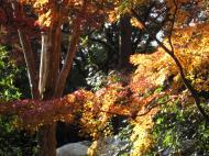 Asisbiz Otowa san Kiyomizu dera garden walkways Kyoto Nov 2009 37
