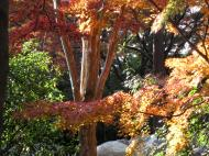 Asisbiz Otowa san Kiyomizu dera garden walkways Kyoto Nov 2009 38