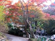 Asisbiz Otowa san Kiyomizu dera garden walkways Kyoto Nov 2009 39