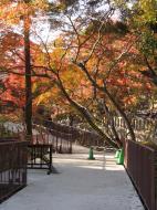 Asisbiz Otowa san Kiyomizu dera garden walkways Kyoto Nov 2009 40