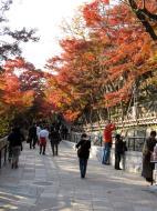 Asisbiz Otowa san Kiyomizu dera garden walkways Kyoto Nov 2009 42
