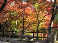 Asisbiz Otowa san Kiyomizu dera garden walkways Kyoto Nov 2009 44