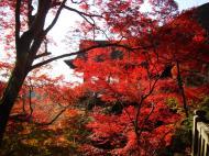 Asisbiz Otowa san Kiyomizu dera main hall Kyoto Nov 2009 01