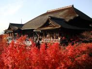 Asisbiz Otowa san Kiyomizu dera main hall Kyoto Nov 2009 21