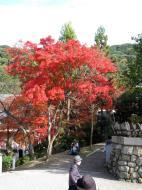 Asisbiz Otowa san Kiyomizu dera main hall shrine room Nov 2009 24