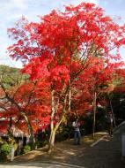 Asisbiz Otowa san Kiyomizu dera main hall shrine room Nov 2009 61