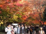 Asisbiz Otowa san Kiyomizu dera main hall shrine room Nov 2009 62