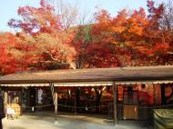 Asisbiz Otowa san Kiyomizu dera temple gardens Kyoto Nov 2009 01