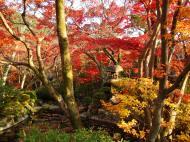 Asisbiz Otowa san Kiyomizu dera temple gardens Kyoto Nov 2009 04