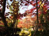 Asisbiz Otowa san Kiyomizu dera temple gardens Kyoto Nov 2009 08