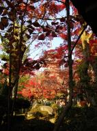 Asisbiz Otowa san Kiyomizu dera temple gardens Kyoto Nov 2009 09