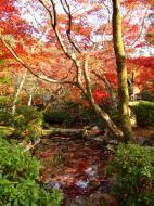 Asisbiz Otowa san Kiyomizu dera temple gardens Kyoto Nov 2009 14