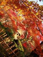 Asisbiz Otowa san Kiyomizu dera temple gardens Kyoto Nov 2009 16