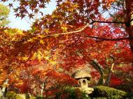 Asisbiz Otowa san Kiyomizu dera temple gardens Kyoto Nov 2009 17
