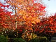 Asisbiz Otowa san Kiyomizu dera temple gardens Kyoto Nov 2009 18