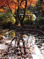 Asisbiz Otowa san Kiyomizu dera temple gardens Kyoto Nov 2009 20