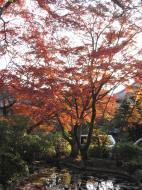 Asisbiz Otowa san Kiyomizu dera temple gardens Kyoto Nov 2009 22