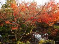 Asisbiz Otowa san Kiyomizu dera temple gardens Kyoto Nov 2009 23